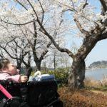 茨城の桜の名所といえば千波湖!ほかは知らない