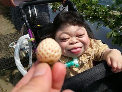 車椅子OK!人工呼吸器OK!茨城のバリアフリーないちご狩り
